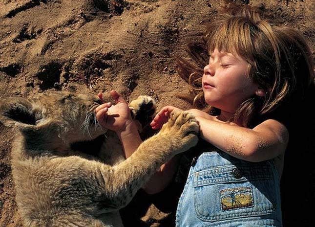 Az anya egyedül hagyja a lányát egy oroszlánnal