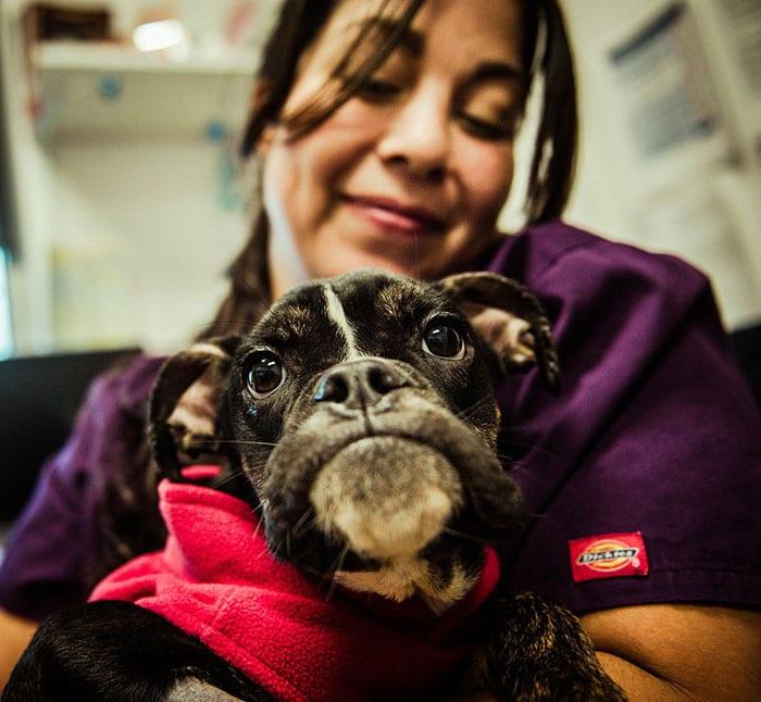 Egy gödör mélyén találták az élettelen kutyát