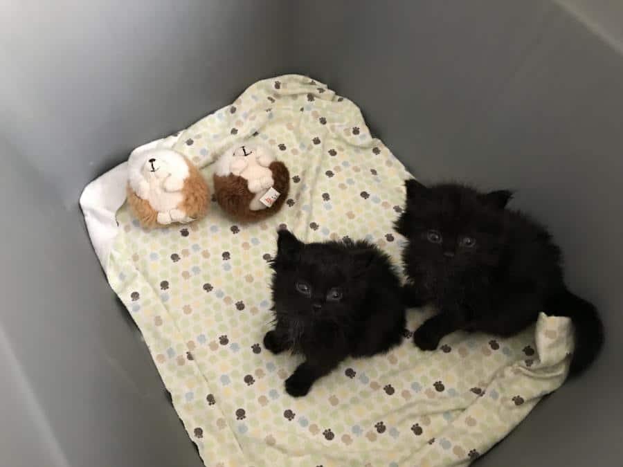 Elhagyott kiscicákat talál a teherautója alatt