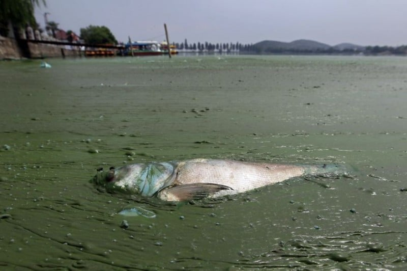 Ez a teknős a műanyag csapdájába esett