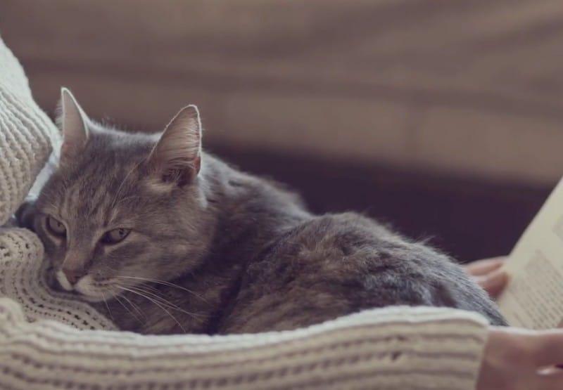 Ez történik, ha macskát viszel az ágyba