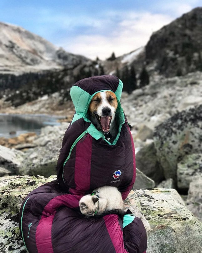 Gyönyörű fotók egy kutya és egy macska barátságáról