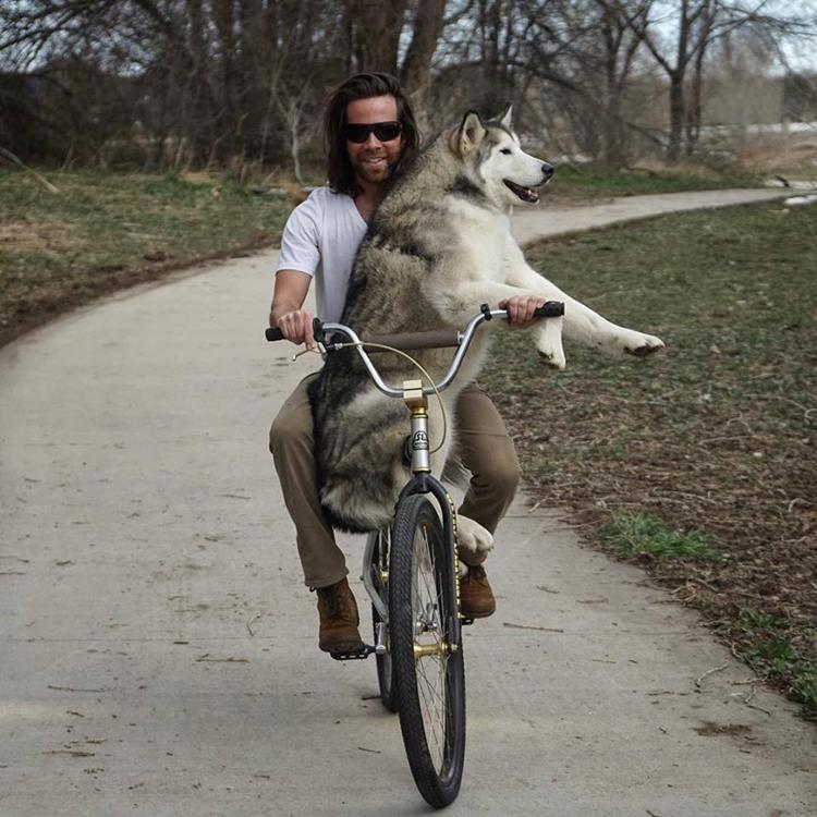 Lokinál boldogabb kutya aligha létezik