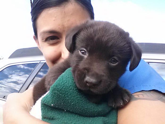 Már születése előtt halálra volt ítélve a kutyus