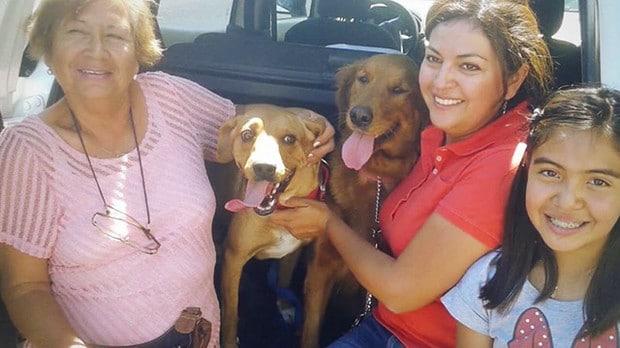 Majdnem meghalt a kutya amikor a nő befogadta