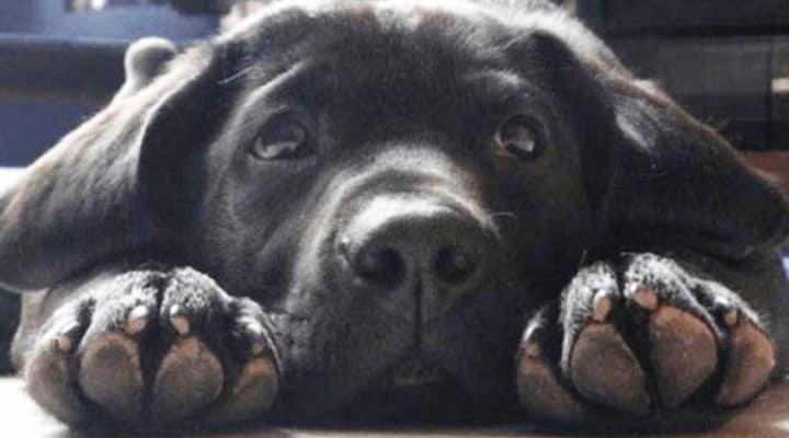 Majdnem visszavitte a depressziós kutyát a menhelyre