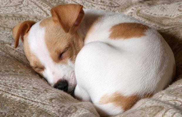 Milyen pózban szokott aludni a kutyád