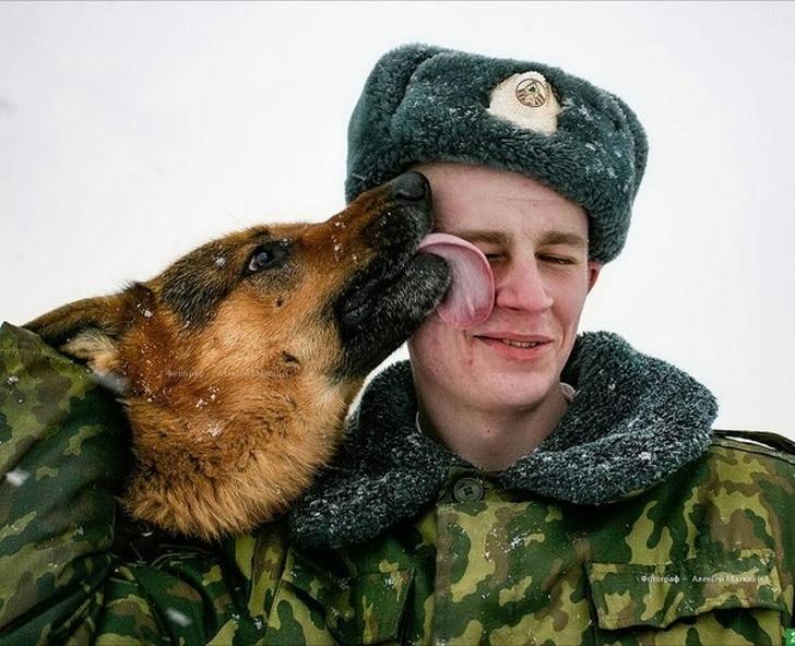 Német juhászkutyát szeretnél