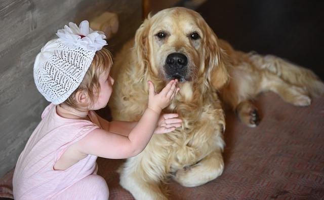 Nézd meg, mit üzen neked a kutyád