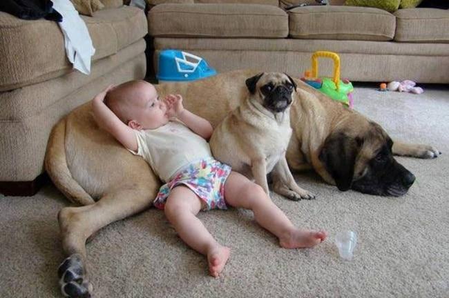 a gyerekeknek miért van szükségük kutyára