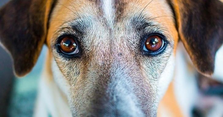 a kutyák képesek felismerni a rossz embereket