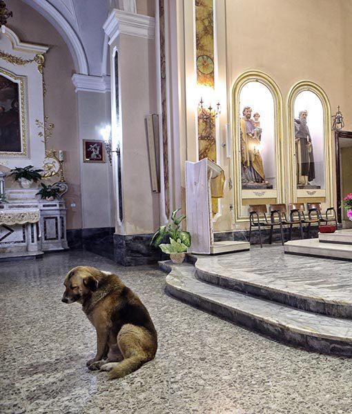 a kutya minden héten templomba jár