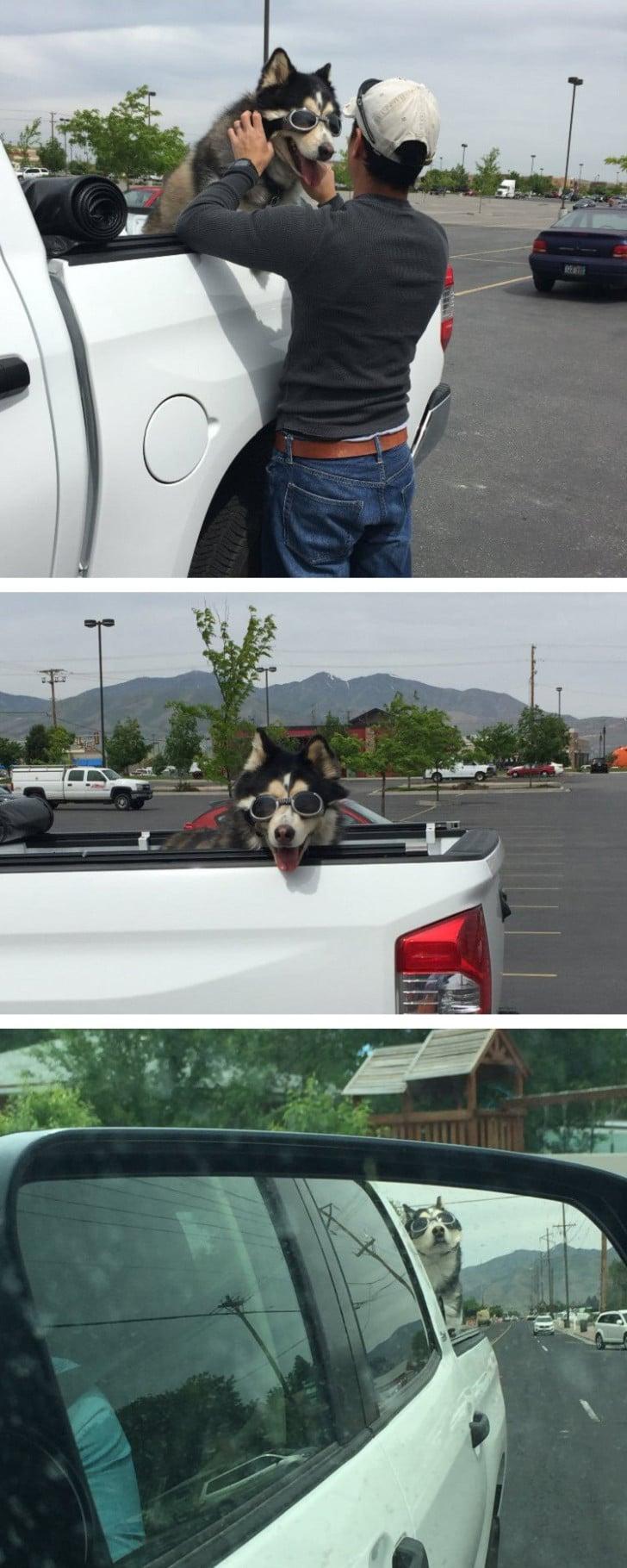 a kutya teljes értékű családtagnak számít