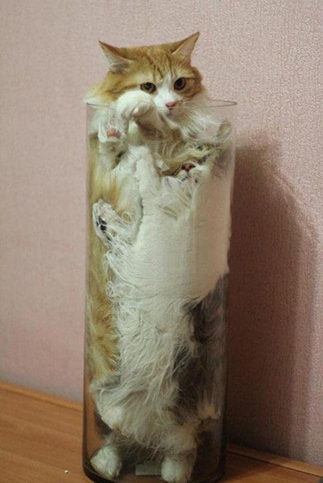 a macskák folyékony halmazállapotúak