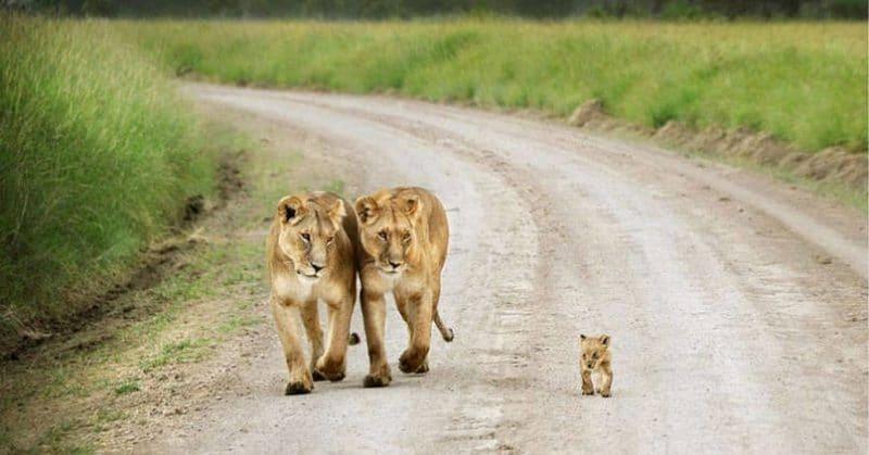 a vadon élő állatok is tele vannak szeretettel