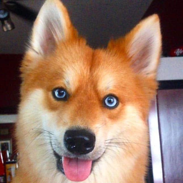 a világ legkülönlegesebb kutyája
