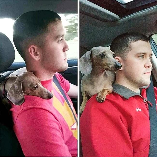 az állatok hűsége semmihez sem fogható
