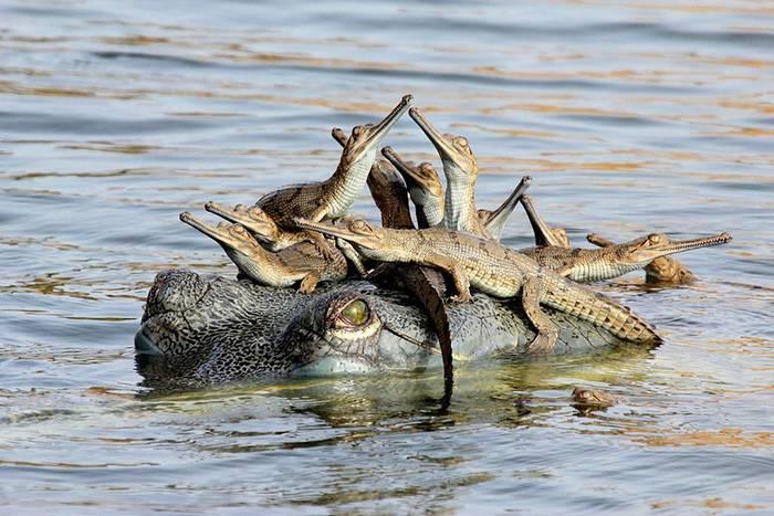 az állatvilág legmeghatóbb szülői pillanatai
