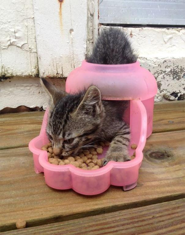 bolondos macskák