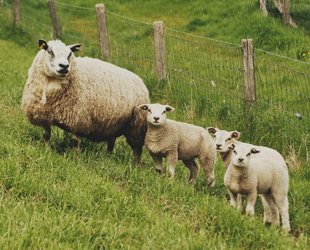 családi fotók az állatvilágból
