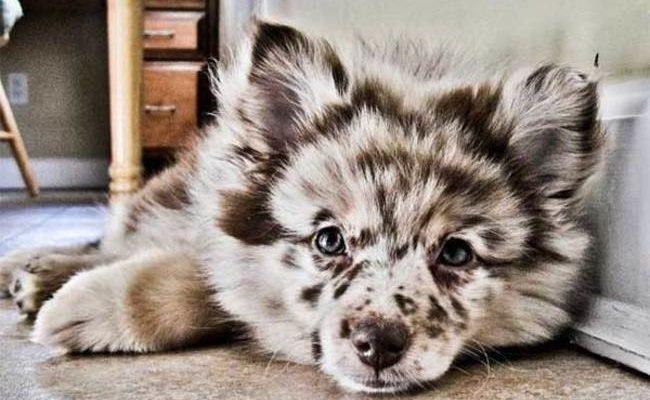 csodaszép kutyák