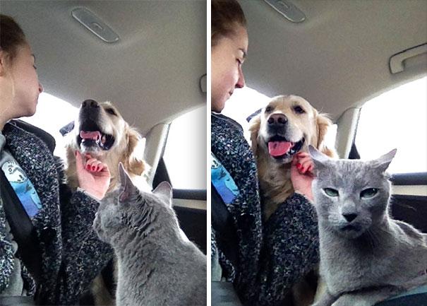 drámázó macskák