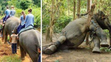 elefántos túrák