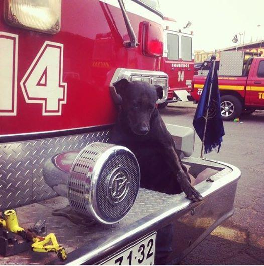 elhunyt tűzoltókutya