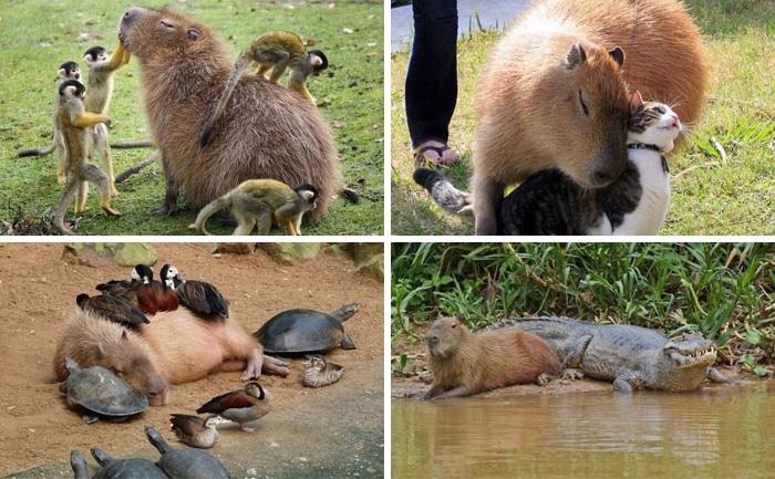 ezek az állatok mindenkit felvidítanak