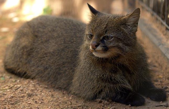 gyönyörű és ritka macskafélék
