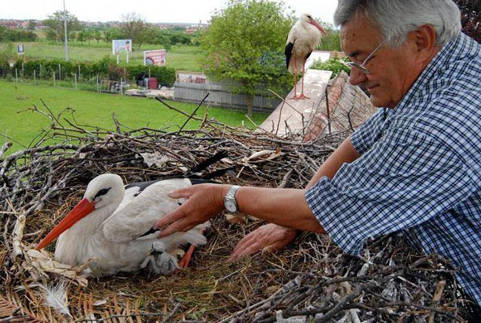hűséges gólyák