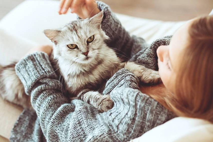 ha macskával alszol