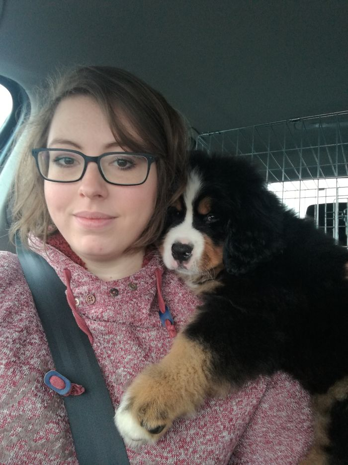 kutyák és gazdik, első találkozásának pillanatai