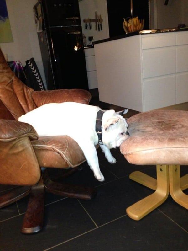 kutyák, akik nem szeretik a hétfőt