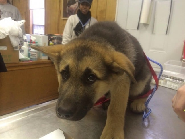 kutyák félnek az állatorvostól