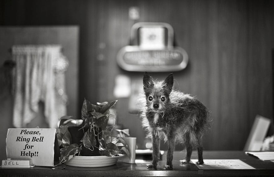 legcsodálatosabb fotósorozat öreg kutyákról