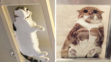macskák üvegasztalon