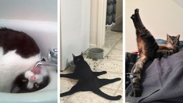 macskák furcsa pózban