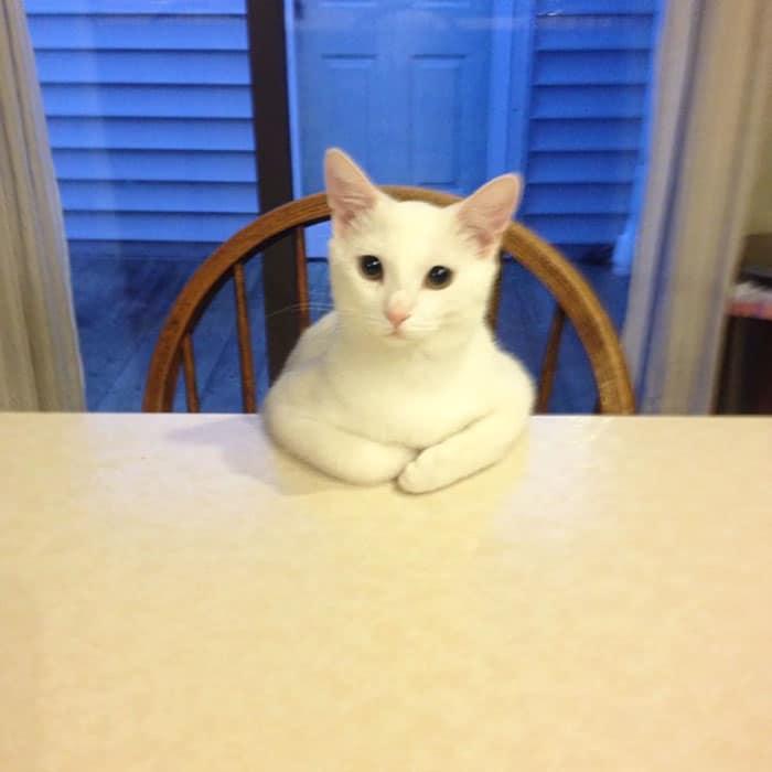 macskák furcsa pózban10