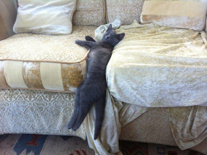 macskák furcsa pózban12