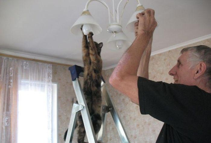 macskák furcsa pózban6