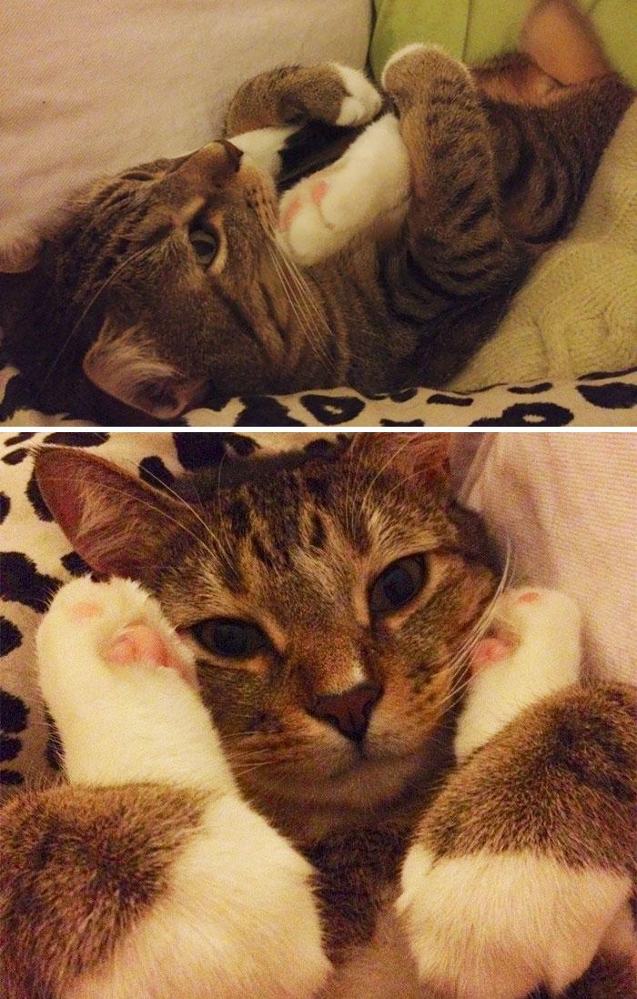 macskák furcsa pózban8