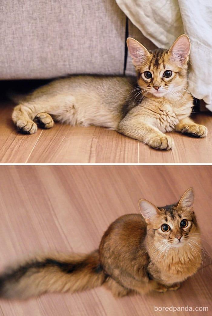 macskák gyorsan felnőttek