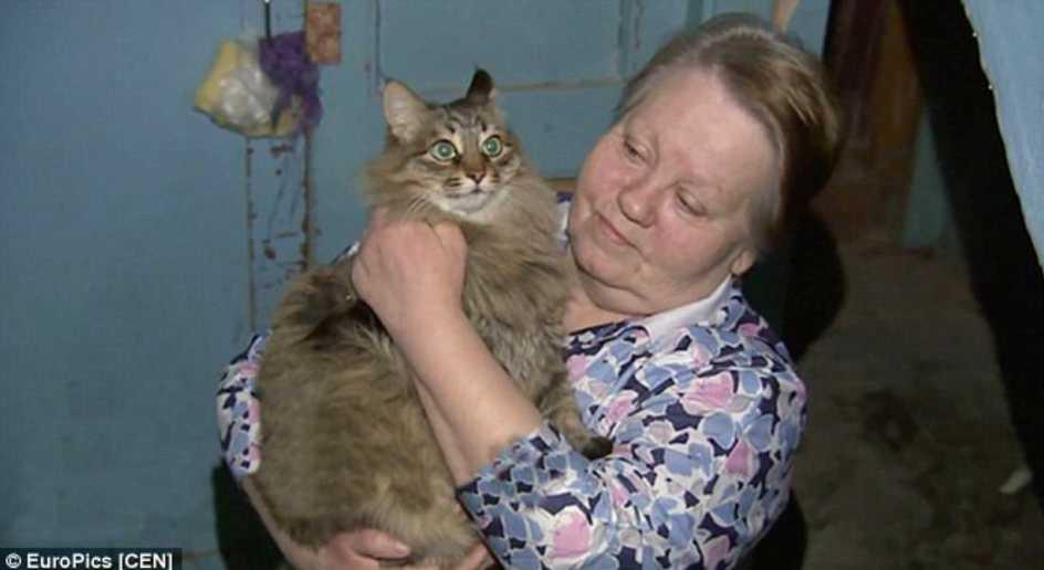 macska mentette meg a kisbabát