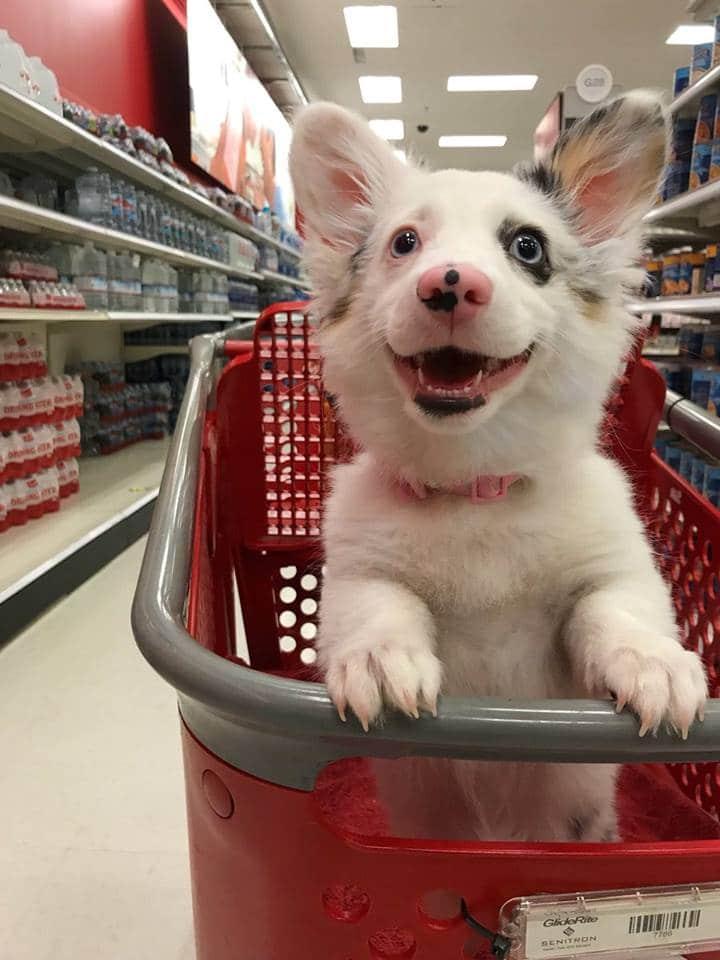 nagyon boldog kutya