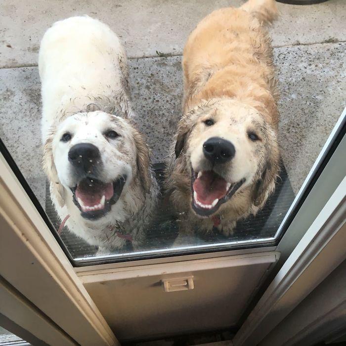 sárfürdőző kutyák