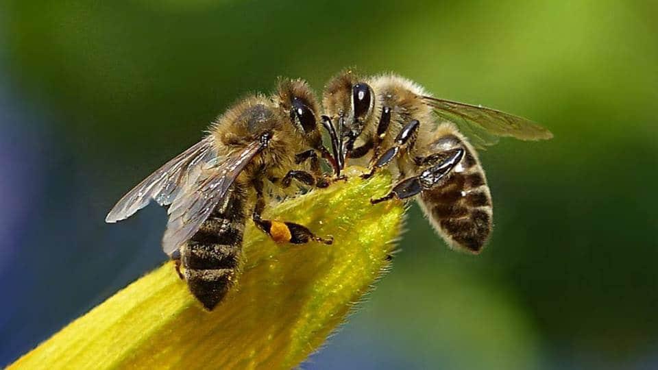segítsük a méheket