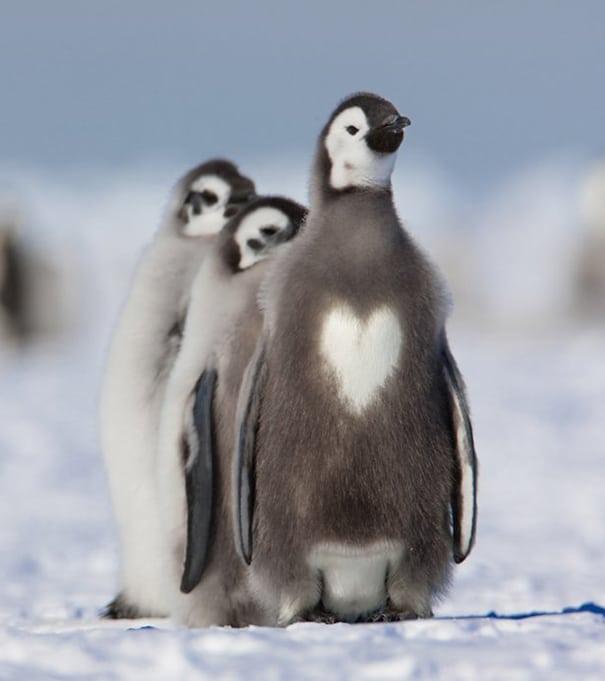 szívecskés bundájú állatok