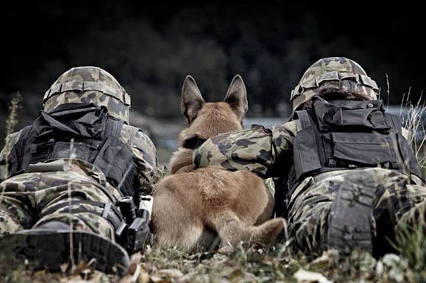szolgálati kutyák hétköznapjai