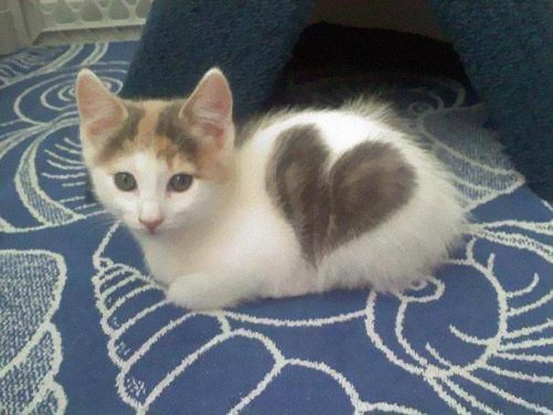 tarka cicák